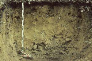 Bodenprofil einer Pseudogley-Braunerde