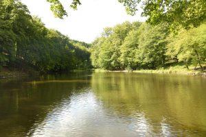 Der Waldteich im Rumbecker Holz ist ein künstliches Gewässer