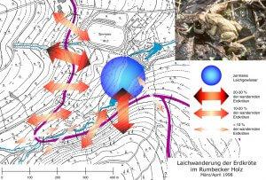 Richtung und Intensität der Laichwanderung der Erdkröte im Bereich Rumbecker Holz.