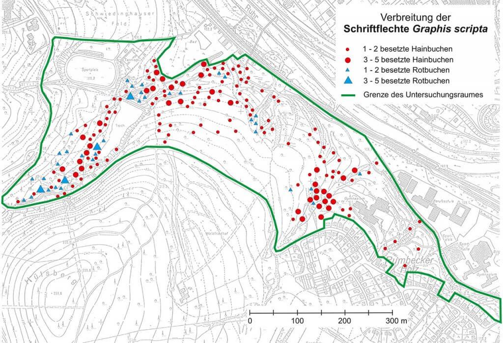Verbreitungsbild der Schriftflechte im Rumbecker Holz und im angrenzenden unteren Schwiedinghauser Bachtal.
