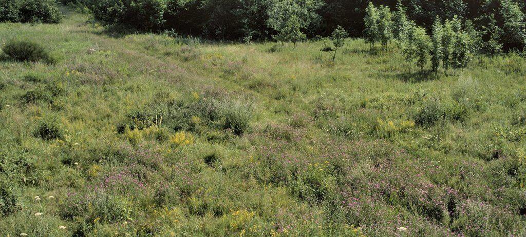 Unterschiedlich strukturierte Graslandfläche in der Ruhraue.