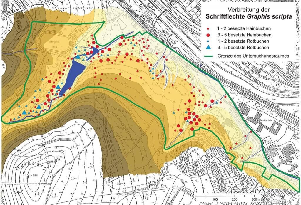 Verbreitungsbild der Schriftflechte auf der Grundlage des Geländereliefs der Untersuchungsfläche Rumbecker Holz.