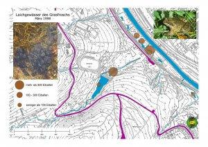 Laichgewässer des Grasfroschs im Rumbecker Holz und der Ruhraue