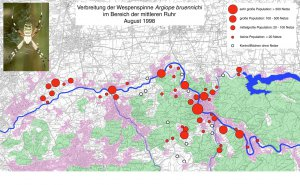 Verbreitung der Wespenspinne Argiope bruennichi im Bereich der mittlerer Ruhr 1998