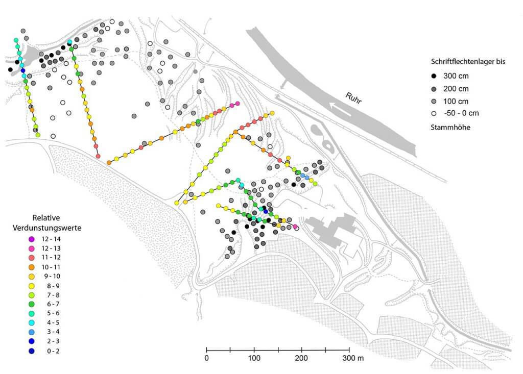 Verbreitung der Schriftflechtenlager im Rumbecker Holz in Bezug auf die maximal besiedelte Höhe am Hainbuchenstamm und in Beziehung zu den Messergebnissen zur bodennahen Verdunstung.