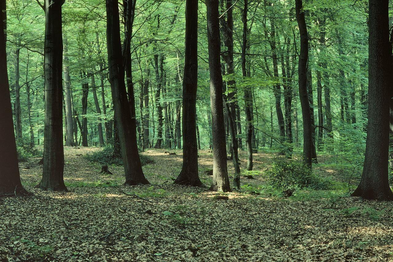 Baumschicht
