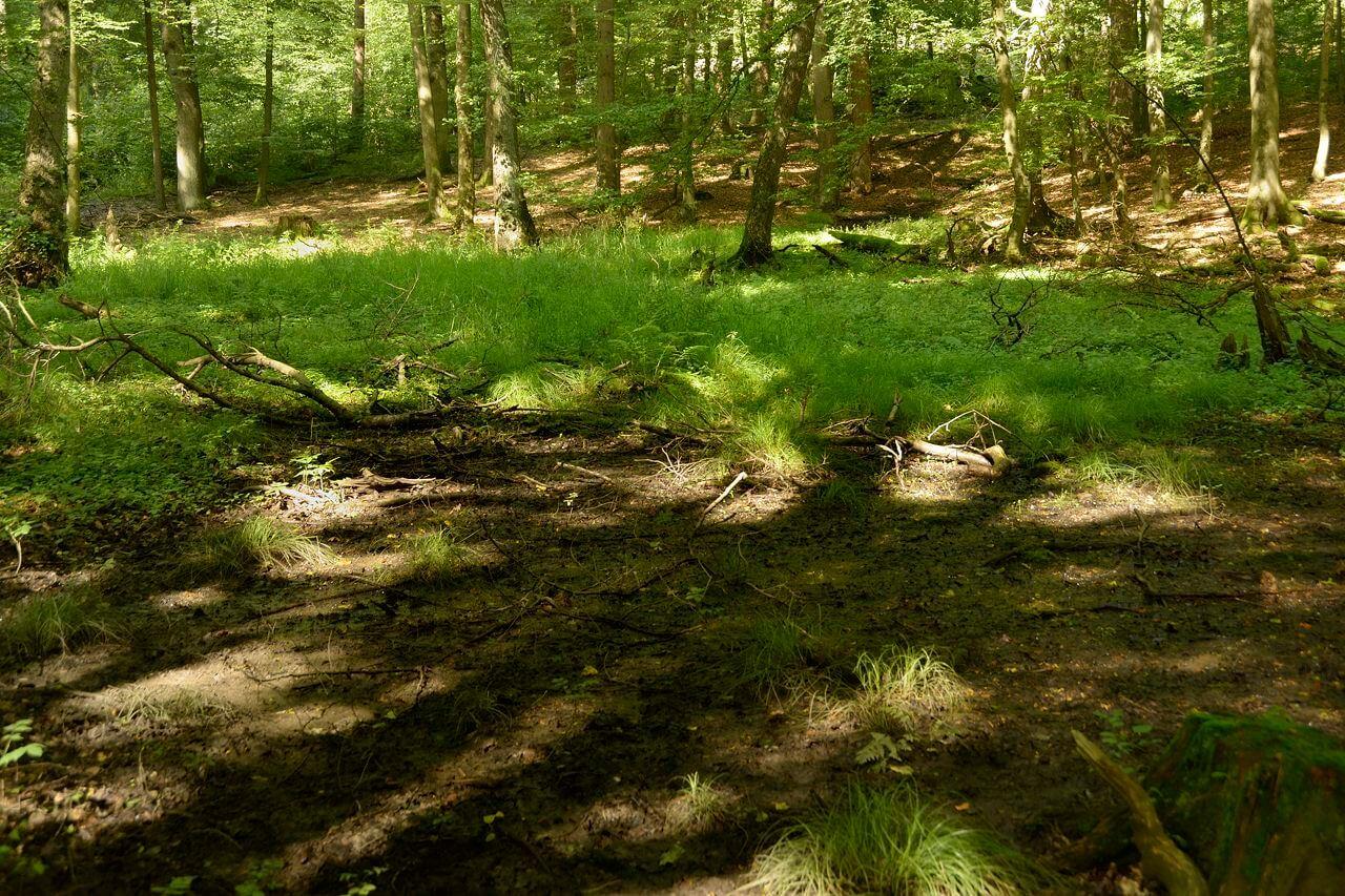 Pflanzengruppierung mit Existenz auf nassen Böden