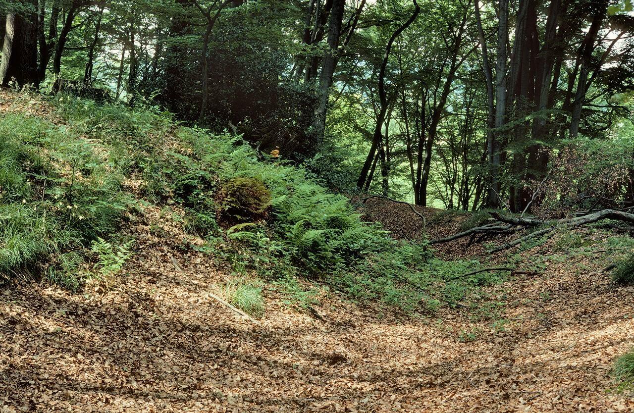Pflanzen-Gruppierung mit Existenz auf sauren Böden